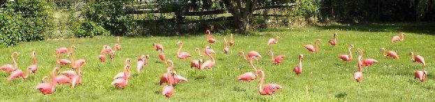 flamingossetup2