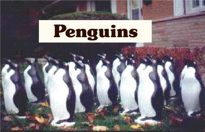 penguinsphoto